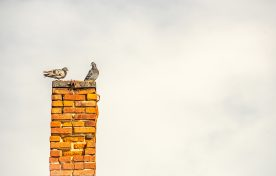 Chimney with birds
